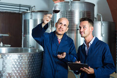 Experts men examining wine Royalty Free Stock Photo