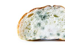 Expired Bread with Mold.  on white background with Clipp Stock Photos