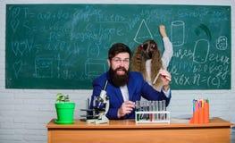 Explication de la biologie aux enfants Travail barbu de professeur d'homme avec des tubes de microscope et ? essai dans la salle  photo stock