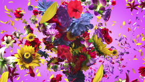 Exploderande färgrika blommor vektor illustrationer