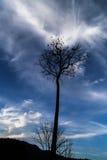 Explodierende Wolke hält sterbenden Baum lebendig Stockbilder