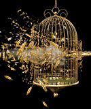 Exploding bird cage Royalty Free Stock Photos