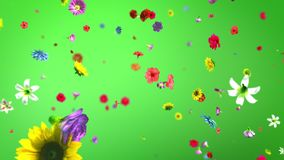 Exploding colorful flowers in 4K vector illustration