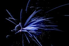 Exploding firework. Blue firework exploding in the night sky royalty free stock image