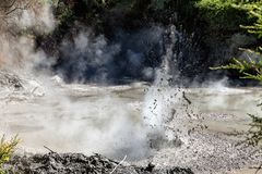 An exploding hot mud pool in Wai-O-Tapu Thermal Wonderland, Rotorua royalty free stock photography