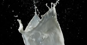 Exploding Milk against Black Background,