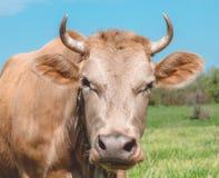 Exploitation d'élevage agricole en Europe Images libres de droits