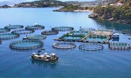 Exploitation de pisciculture Image libre de droits