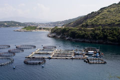 Exploitation de pisciculture Photo stock