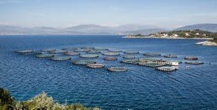 Exploitation de pisciculture avec les cages de flottement Photo libre de droits
