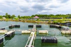 Exploitation de pisciculture dans l'étang. Images libres de droits