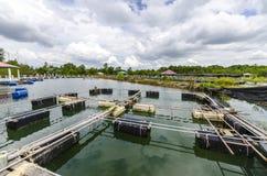 Exploitation de pisciculture dans l'étang. Photographie stock libre de droits