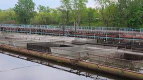 Exploitation de pisciculture de starlette Images stock