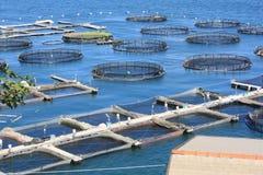 Exploitation de pisciculture en La Spezia Italie photographie stock libre de droits