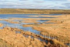 Exploitation de pisciculture et ferme de moutons Image stock