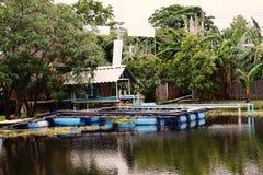 Exploitation de pisciculture ; poissons d'eau douce photos stock