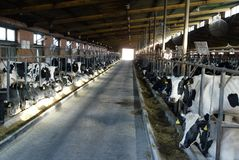 Exploitation laitière Photo stock
