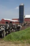 Exploitation laitière du Wisconsin et vaches à lait modernes Image libre de droits