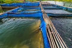 Exploitations de pisciculture avec le filet bleu Photographie stock