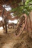 Exploração agrícola Imagens de Stock