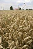 Exploração agrícola Imagem de Stock Royalty Free