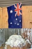 Exploração agrícola australiana da tosquia de ovinos Fotos de Stock