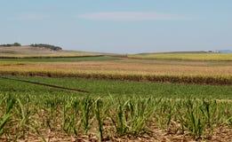 Exploração agrícola australiana do sugarcane da indústria de açúcar Imagens de Stock Royalty Free