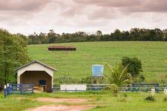 Exploração agrícola brasileira Fotografia de Stock