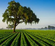 Exploração agrícola californiana imagens de stock royalty free
