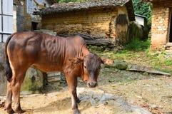 Exploração agrícola chinesa da montanha Imagem de Stock Royalty Free