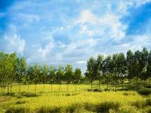 Exploração agrícola com céu azul e nuvens Fotografia de Stock Royalty Free