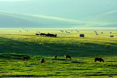 Exploração agrícola conservada em estoque Foto de Stock Royalty Free
