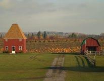 Exploração agrícola da abóbora Imagem de Stock Royalty Free