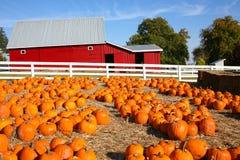 Exploração agrícola da abóbora de Halloween Imagem de Stock Royalty Free