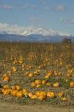 Exploração agrícola da abóbora em Colorado Imagens de Stock Royalty Free