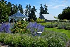 Exploração agrícola da alfazema, Sequim, Washington Foto de Stock Royalty Free