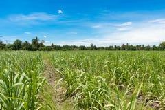 Exploração agrícola da colheita com céu nebuloso Foto de Stock