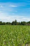 Exploração agrícola da colheita com céu nebuloso Imagem de Stock Royalty Free