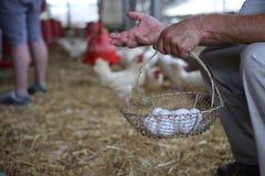 Exploração agrícola da fibra-cesta dos ovos das mãos Foto de Stock Royalty Free