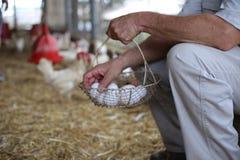 Exploração agrícola da fibra-cesta dos ovos das mãos Fotos de Stock