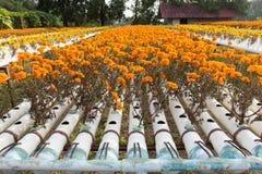 Exploração agrícola da flor da hidroponia Fotos de Stock