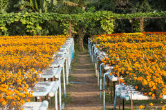Exploração agrícola da flor da hidroponia Fotos de Stock Royalty Free