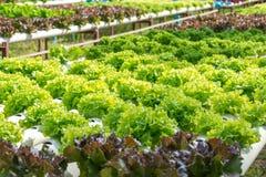 Exploração agrícola da hidroponia dos vegetais Fotografia de Stock Royalty Free