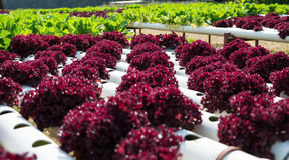 Exploração agrícola da hidroponia dos vegetais Imagem de Stock Royalty Free