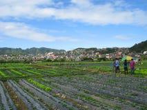Exploração agrícola da morango, Baguio, Filipinas imagens de stock