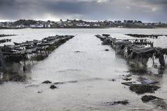 Exploração agrícola da ostra na maré baixa em Britanny, Lilia, França em um tormentoso Imagens de Stock