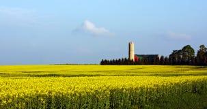 Exploração agrícola da semente de mostarda Foto de Stock