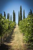 Exploração agrícola da uva de Napa Valley Fotografia de Stock Royalty Free