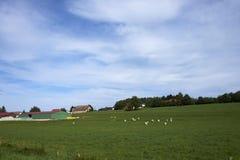Exploração agrícola da vaca Imagem de Stock Royalty Free