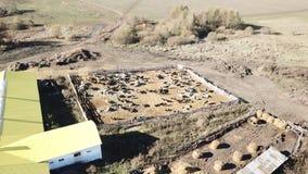 Exploração agrícola da vaca e celeiro, helicóptero de tiro video estoque